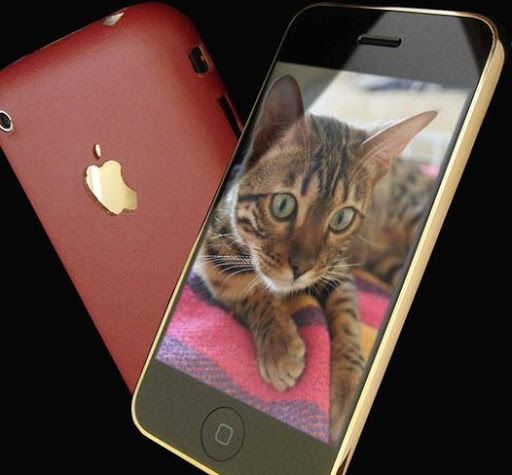 cats wallpapers for whatsapp