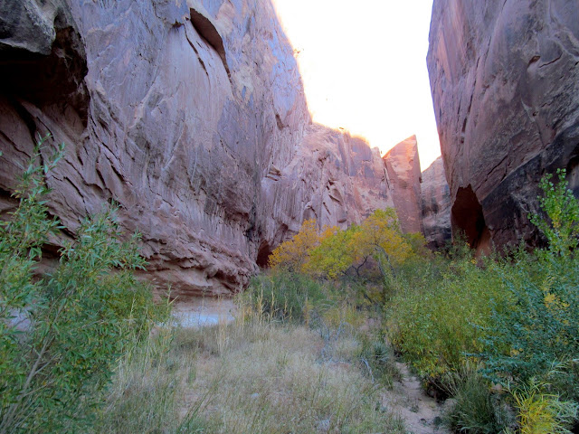 View up the main fork of White Roost Canyon