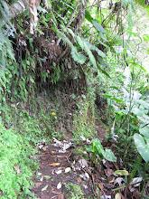 Photo: Vele zgn. epifytische planten, varens en andere - ik moet nog een boel leren - die groeien op de takken van bomen.