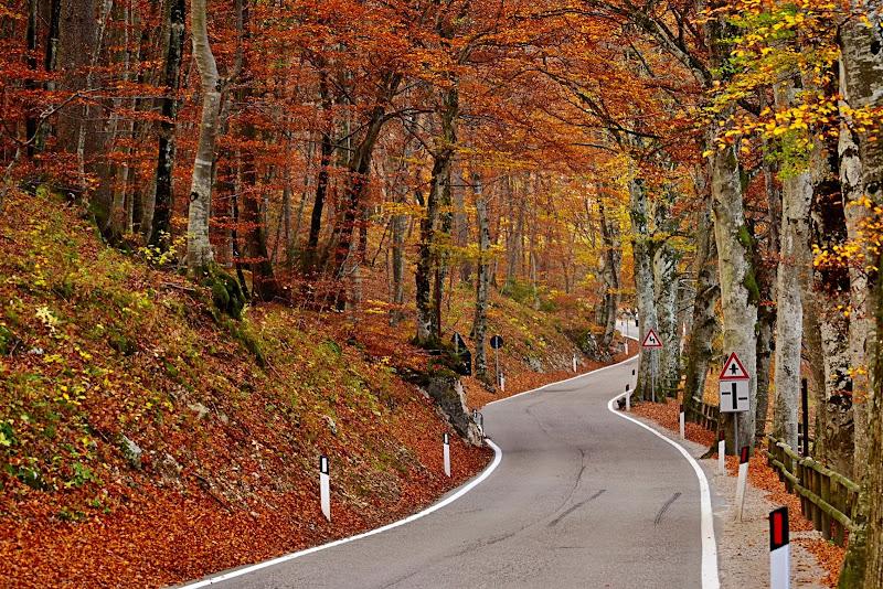 Autunno Road di giuseppedangelo