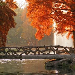 autumn by Victor Pavel - Buildings & Architecture Bridges & Suspended Structures ( ... )