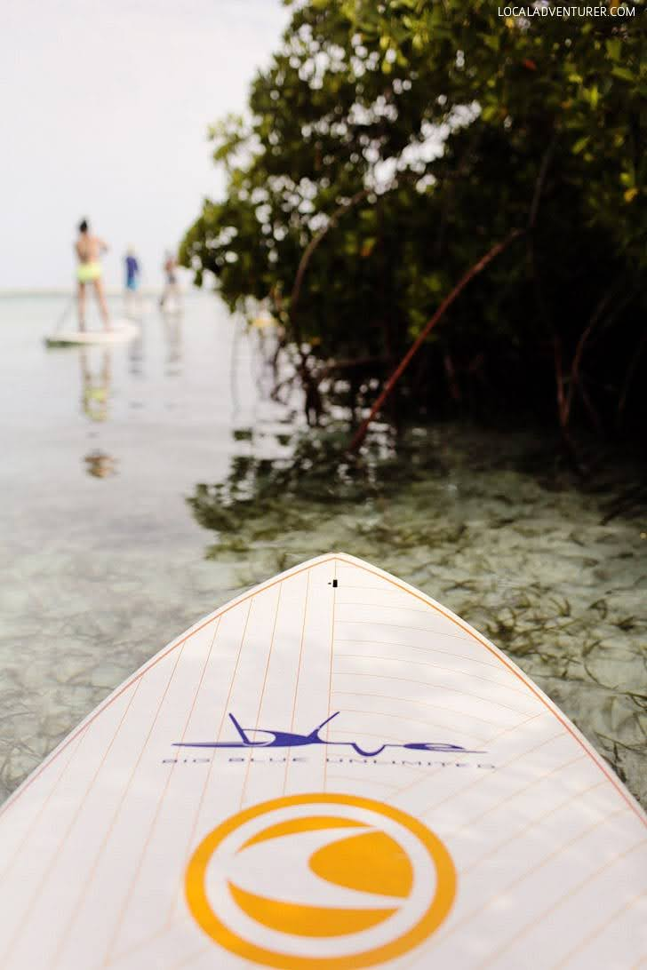 Stand Up Paddle Boarding through the Mangrove (15 Best Things to Do in Turks and Caicos).