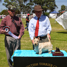 Photo: Best Minor Puppy, ROBSCOTT AMBER SAND owned by Robyn Dryden
