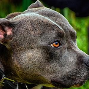 Butschebuerg 2015 Hond DSC_6215b_HDR.jpg