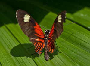 Photo: This postman butterfly is getting ready for flight! Photo by Don Williamson Photography