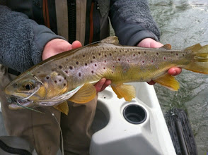 Photo: The streamer was half his length...and not a bad fish- Mad River