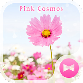 Pink Cosmos  Flower Theme Android APK Download Free By +HOME By Ateam