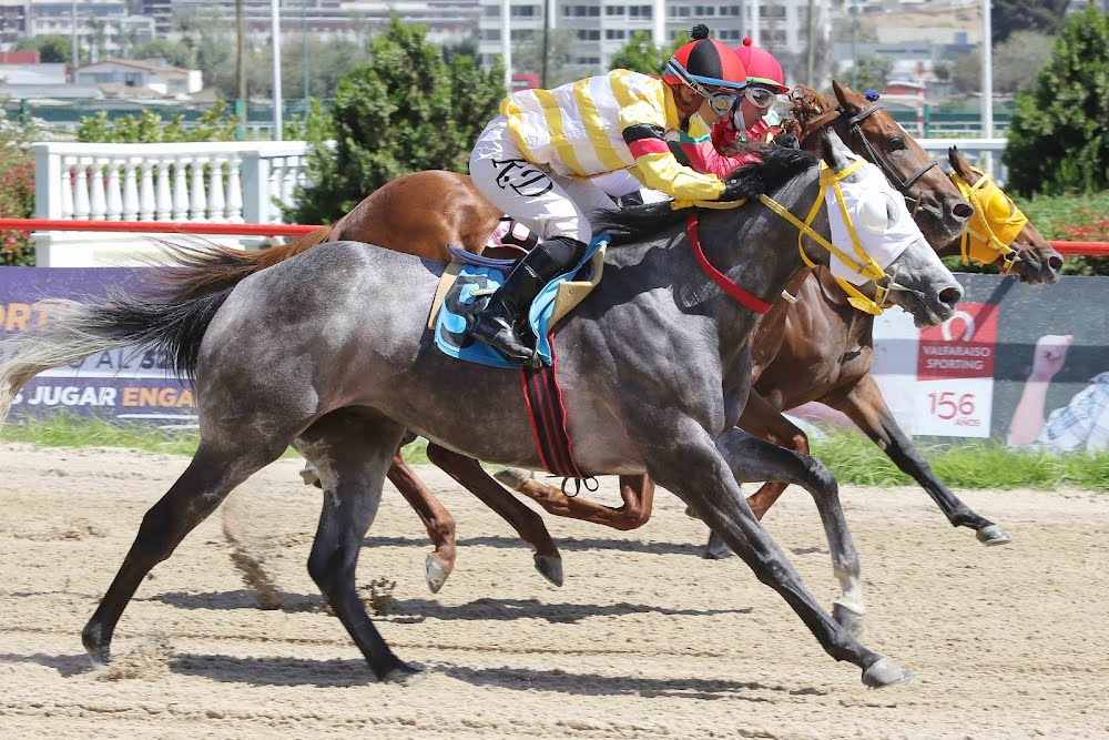 Tordo Made (Don Cavallo) se adjudicó Condicional (1100m-Arena-VSC).