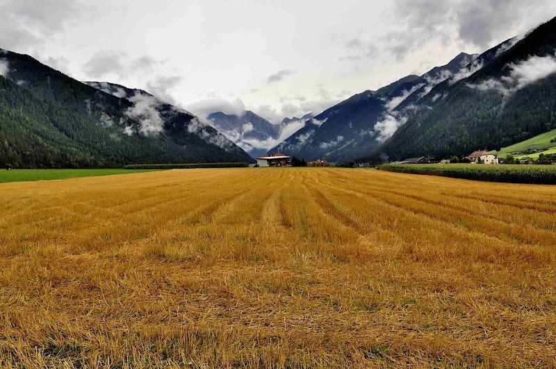 Alta...campagna di Andrea Frati