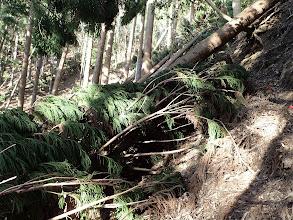 倒木を越えて