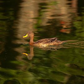 billed by Christo W. Meyer - Novices Only Wildlife