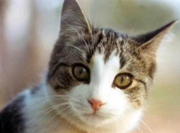 Ham It Up Cat Treats