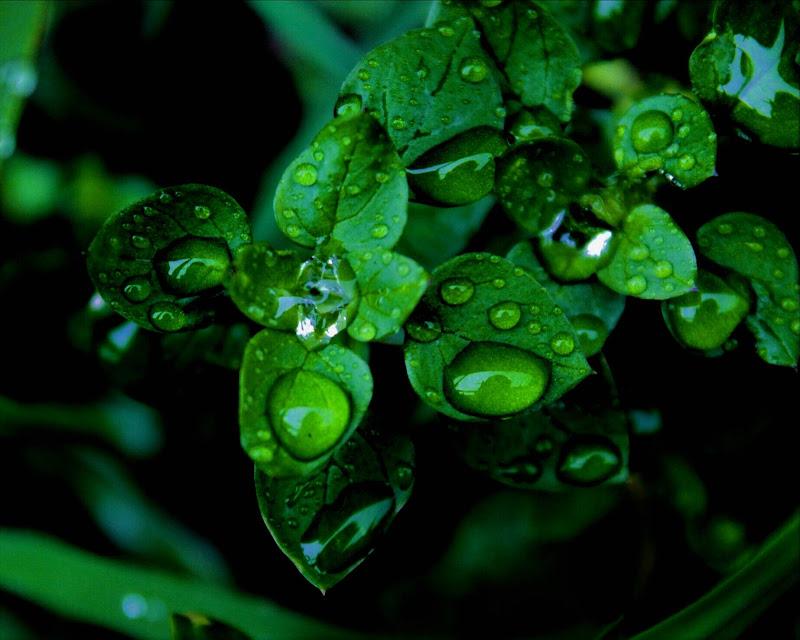 Green rain di giulia_giustarini