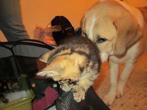 Photo: Helmi tapasi kissanpentuja ja hampaat oli piilossa.