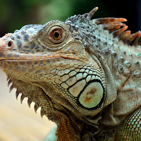 Smile by Zayady Radin - Animals Reptiles