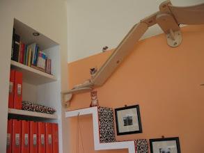Photo: Katzenzimmer - Catwalk Endstation mit Kuschelhöhle im Bücherregal :-D