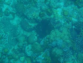 Photo: Amphiprion clarkii (Black Clarkii Clownfish), Siquijor Island, Philippines