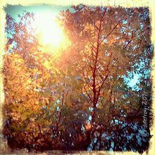 Photo: Grateful for color in front of my house.