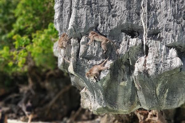 Spot monkeys at Monkey Beach