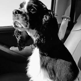 Riding Shotgun by John Roberts - Animals - Dogs Portraits