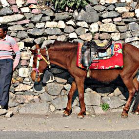 waiting..... by Pratik Nandy - Landscapes Travel