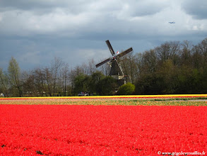 Photo: #013-Les champs de tulipes dans les environs de Lisse.