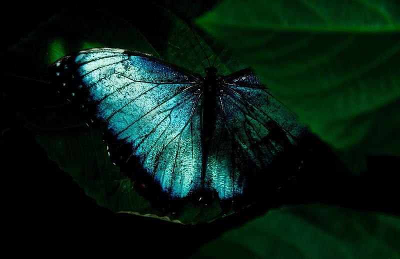 Hidden Beauty  di marikarossiphotography