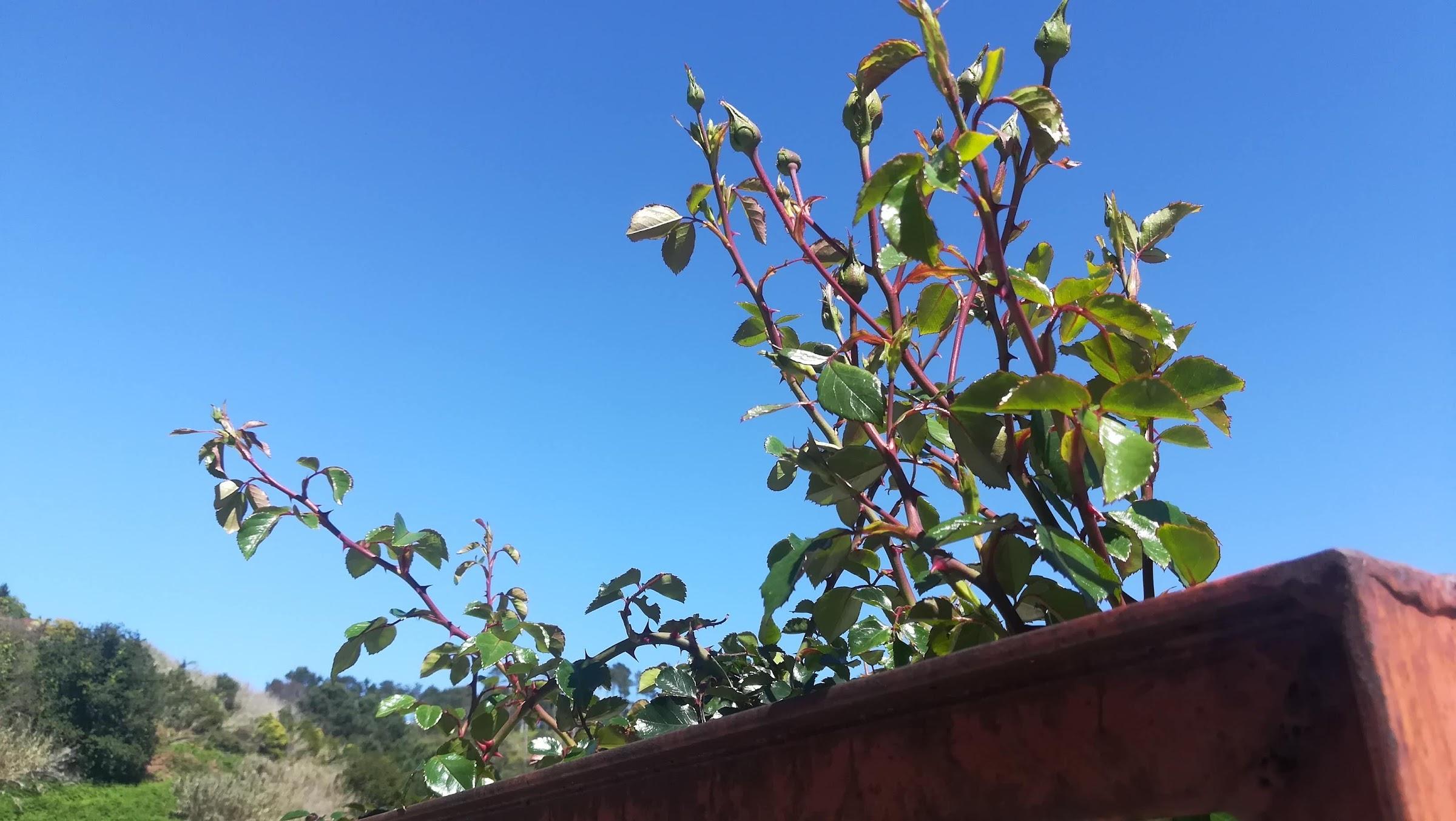 Weg van Madeira betekent weg van de tuin. We zullen veel dingen niet zelf zien bloeien.