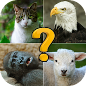 Animal quiz: free quiz game