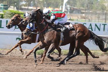 Splendorofthesea (Boboman) se queda con Handicap (1000m-Arena-CHS).
