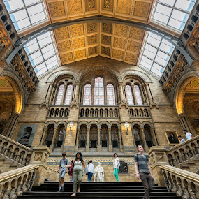 National History Museum London by Wim De Koster - Buildings & Architecture Public & Historical