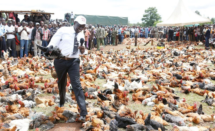 Four to face charges for stealing DP Ruto's eggs in Sugoi