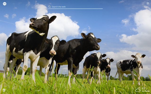 My Cows HD Wallpapers New Tab Theme