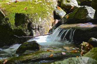 Photo: Brook at Townshend State Park by Linda Carlsen-Sperry