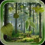 Forest Live Wallpaper v1.2