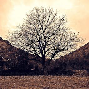 by Milica Đorđević - Nature Up Close Trees & Bushes