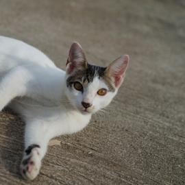 My Little Ponching by Gary Salcedo - Animals - Cats Kittens ( cats, wild life, life, mammal )