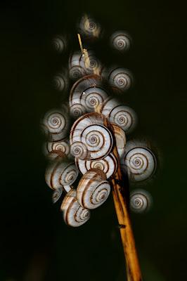 spirali di flori