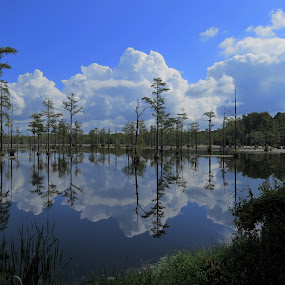 Goodal Summer Reflections by Hal Gonzales - Landscapes Waterscapes ( clouds water swamp cypress trees water )