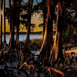A Cypress Sunset by Kevin Kern - Landscapes Sunsets & Sunrises ( lake ponchartrain, new orleans, mandeville, sunset, fontainbleau )