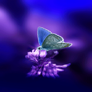 Download 3d Butterfly Live Wallpaper for PC