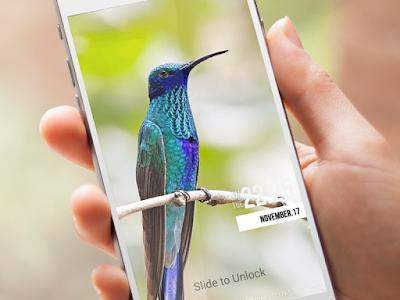 Birds Wallpaper HD Lockscreen screenshot 5