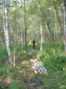 Der Beginn des Moorweges (hier zwei Tage später auf Inspektionsgang). Trotz der lang anhaltenden Trockenkeit waren die Morastlöcher noch tückisch und wurden mit Knüppeldämmen ausgelegt.