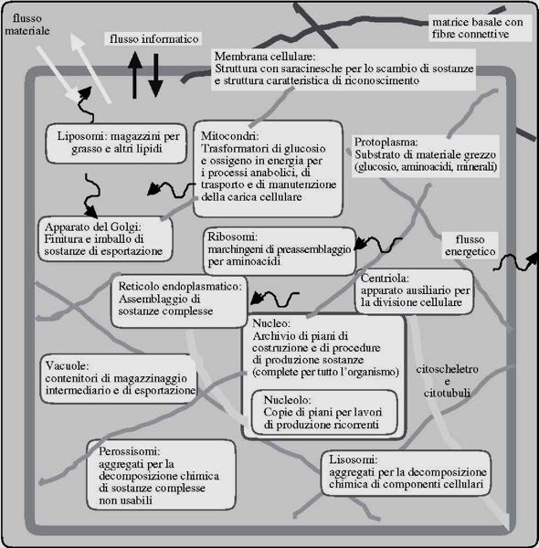 Funzioni di organelli