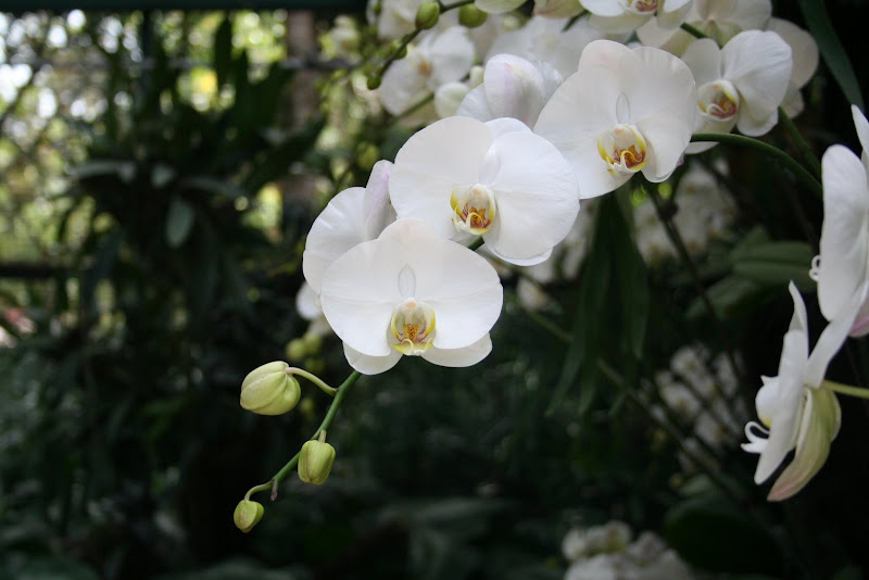 Orchid : Botanical Gardens