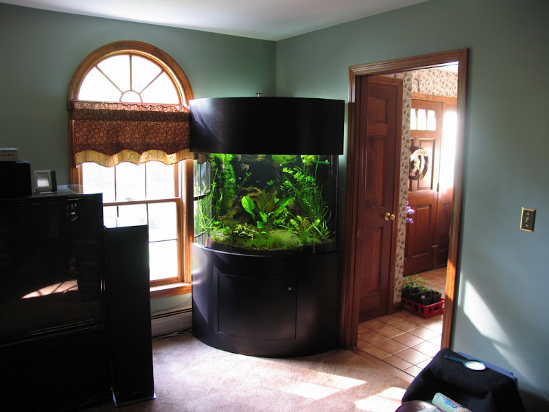 New 90 Gallon Bow Front Tank The Planted Forum 92 Corner