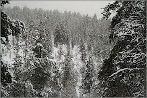 Таинственный финский лес
