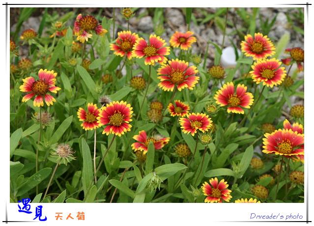 http://lh4.google.com.tw/image/dmreader8/Rnt1s_q57-I/AAAAAAAABnU/LmtqGi52IjY/s800/IMG_0784.jpg