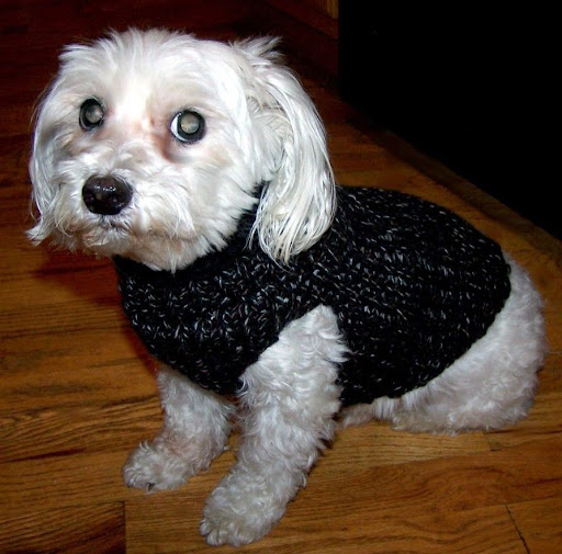 Maltese Dog Knitting Pattern : Loom Lore: Shandy s doggie ?sock? sweater