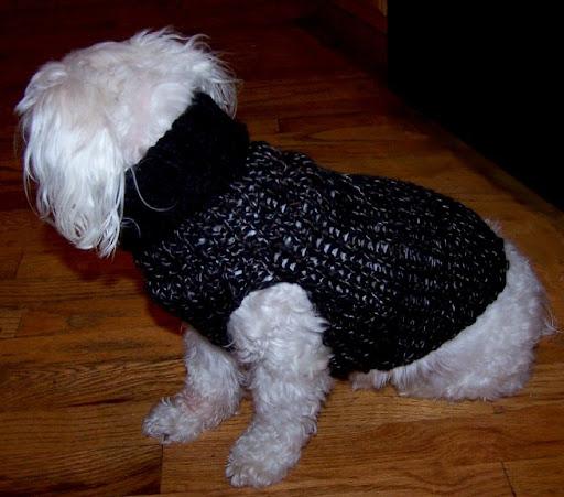 "Loom Lore: Shandy's doggie ""sock"" sweater"